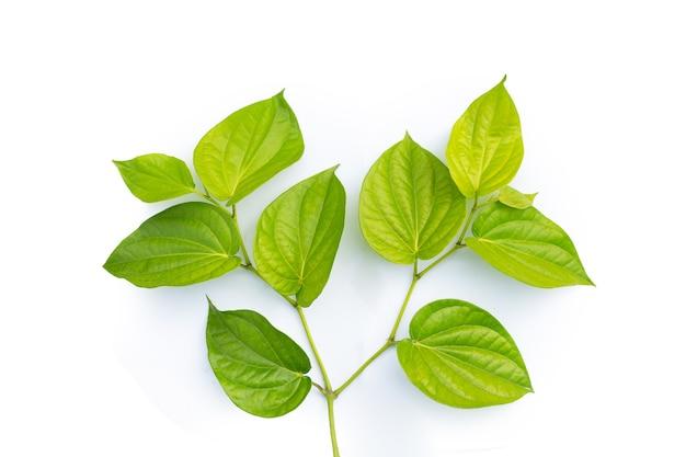 흰색 표면에 구장 식물의 신선한 녹색 잎