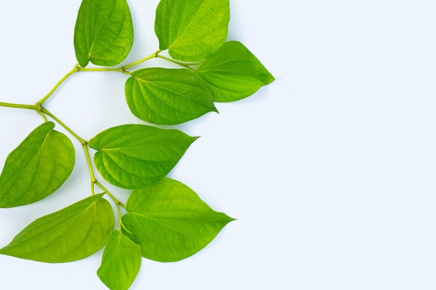 Свежие зеленые листья бетеля на белой поверхности
