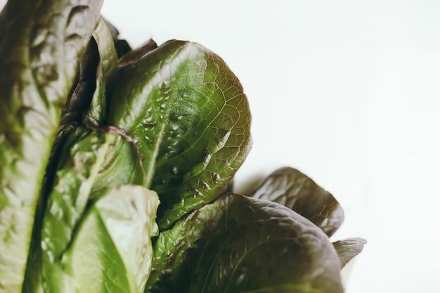 白い背景の上のロメインレタスサラダの新鮮な緑の葉