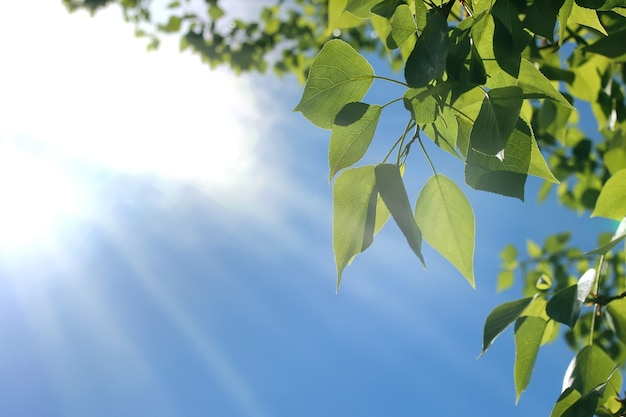 맑고 푸른 하늘에 나무의 신선한 녹색 잎