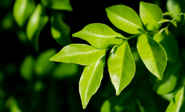 Fresh green leaves spring nature background