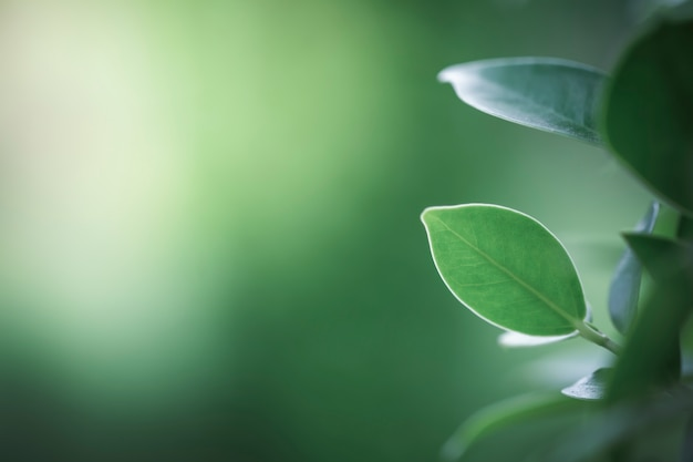 Fresh green leaves with copy space, blurred bokeh and sunshine background.