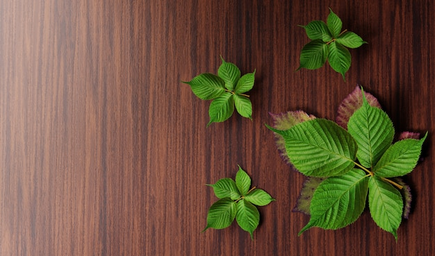 Fresh green leaves on wooden table