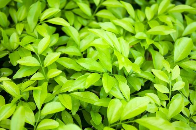 신선하고 녹색 잎