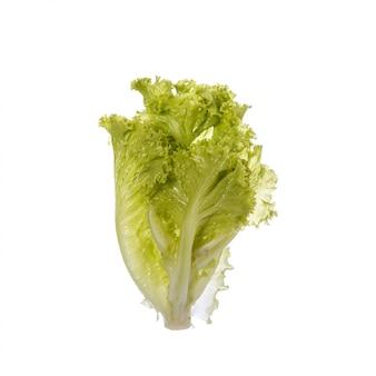 Fresh green lettuce.
