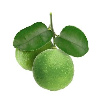 白の上に分離された新鮮な緑のライム