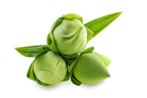 Свежий зеленый цветок лотоса на белом фоне, научные названия - nelumbo spp.