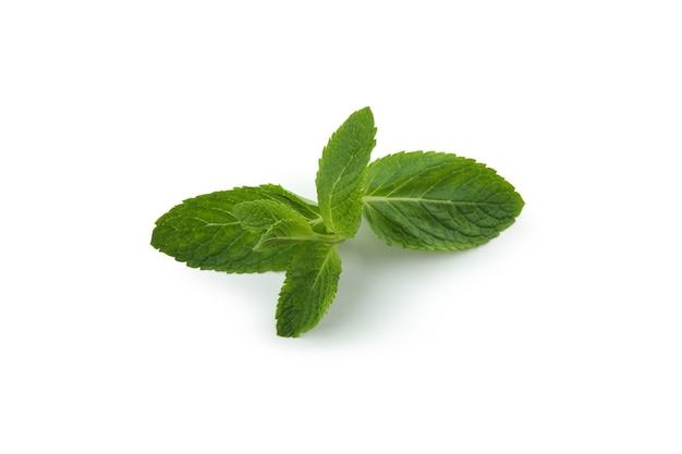 白で分離された新鮮な緑のミント