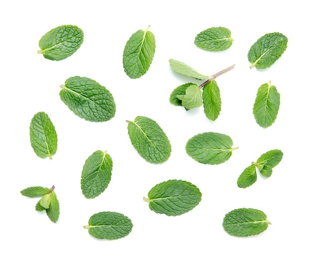 新鮮な緑のミントの葉は、白い背景で隔離。上面図。