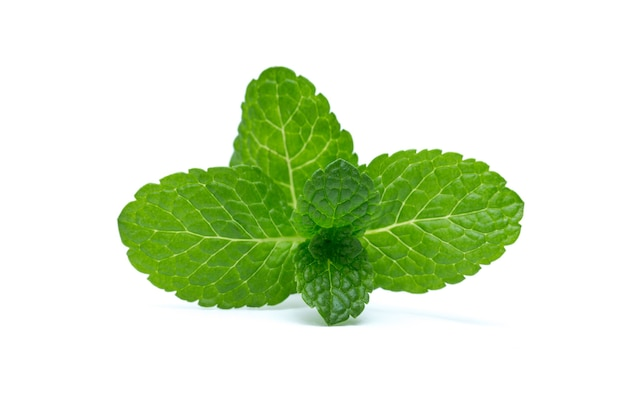 Fresh green mint leaves isolated on white surface. top view.