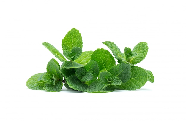 Fresh green mint leaves isolated