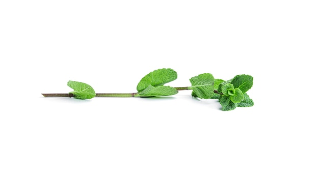 Свежие зеленые листья мяты на белом фоне. фото высокого качества