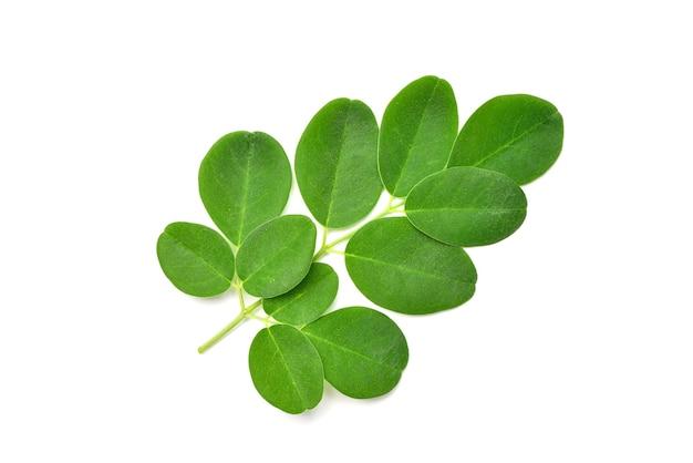 Fresh green moringa leaves isolated on white