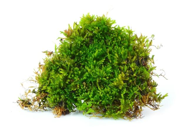 Свежий зеленый мох на фоне.