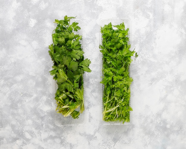 Fresh green mountain coriander, coriander in plastic boxes on grey concrete