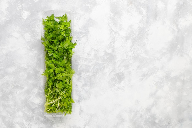 Coriandolo verde fresco della montagna in scatole di plastica su calcestruzzo grigio
