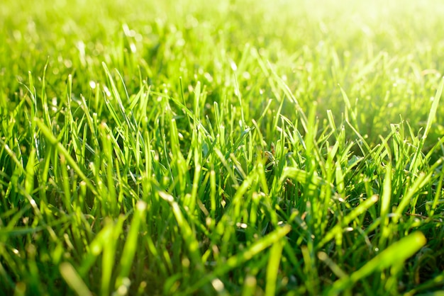 Fresh green mowed grass against bright sunlight in spring. concept of freshness, beginning, purity.