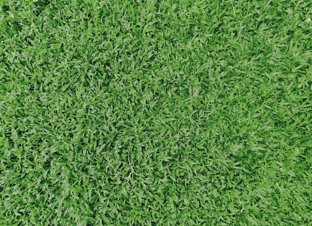 Свежая зеленая натуральная трава