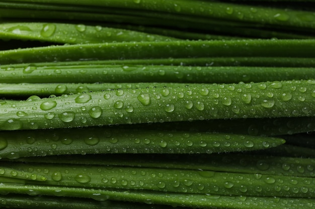 Fresh green onion with water drops