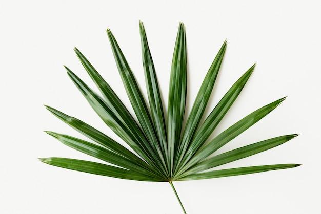 新鮮な緑のヤシの葉の背景