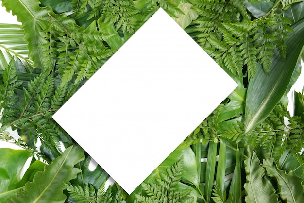 Fresh green palm leaves frame with copy space