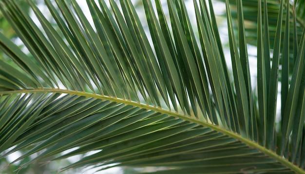 Свежие зеленые пальмы листва тропическая природа