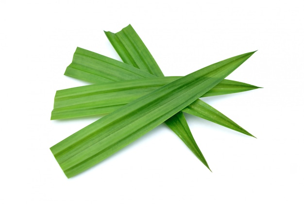 Fresh green pandan leaves isolated
