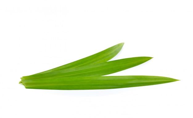 分離された新鮮な緑のパンダンの葉
