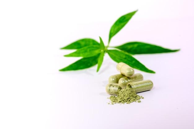 Свежая зеленая метельчатая и капсулы andrographis paniculata тайские травы и китайские травы, используемые для лечения, снимают симптомы простуды и могут помочь в борьбе с covid-19. изолированные на белом фоне.