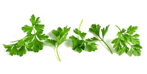 新鮮な緑のパセリ、白い背景で隔離の葉を持つ枝。