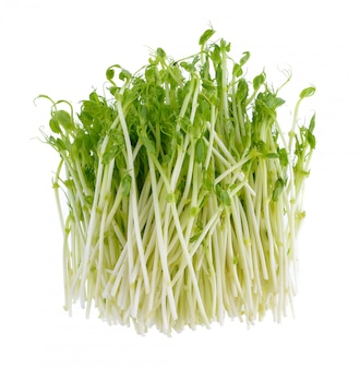 Fresh green pea sprouts on white