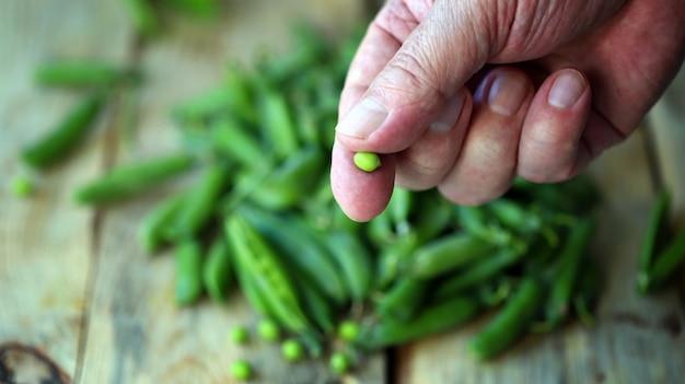 手に新鮮なグリーンピース