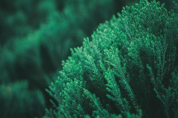 森の中の新鮮な緑の松の葉。