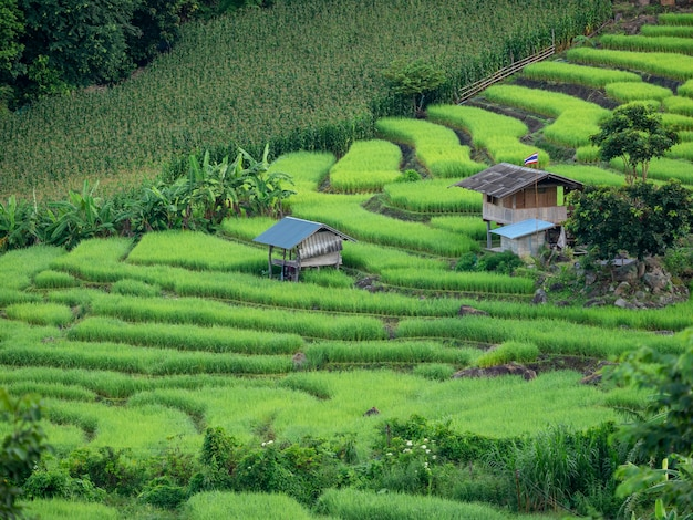 태국 치앙마이 매채엠의 파봉피앙 마을에 있는 신선한 녹색 논 테라스