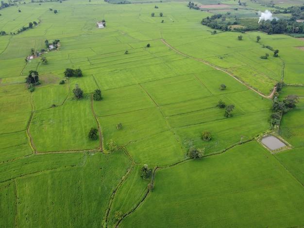 Свежие зеленые рисовые поля, аэрофотоснимки с дронов