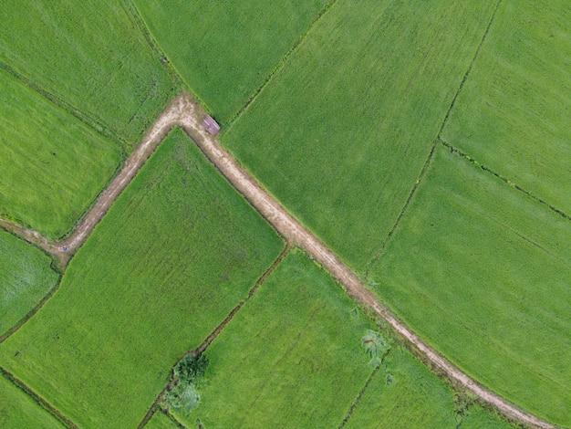 신록의 논, 드론으로 찍은 항공 사진