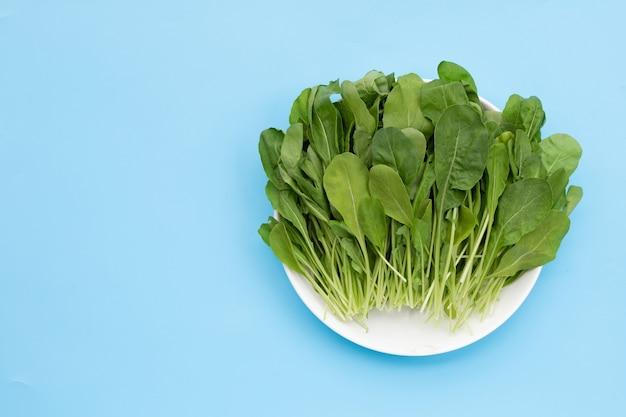 青の背景に新鮮な緑のロケットサラダ。