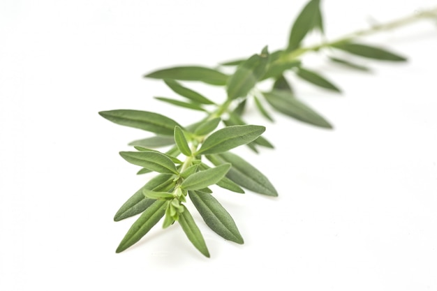 Fresh green rosemary isolated on white, top view. aromatic herb.