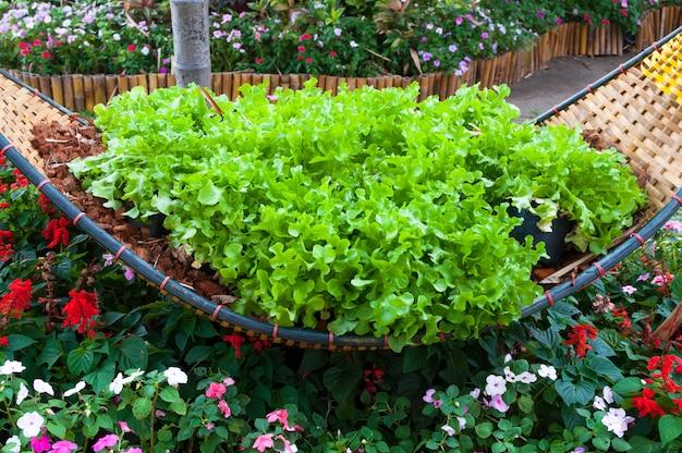 Свежий зеленый салат из овощей на бамбуковом переплетении в саду