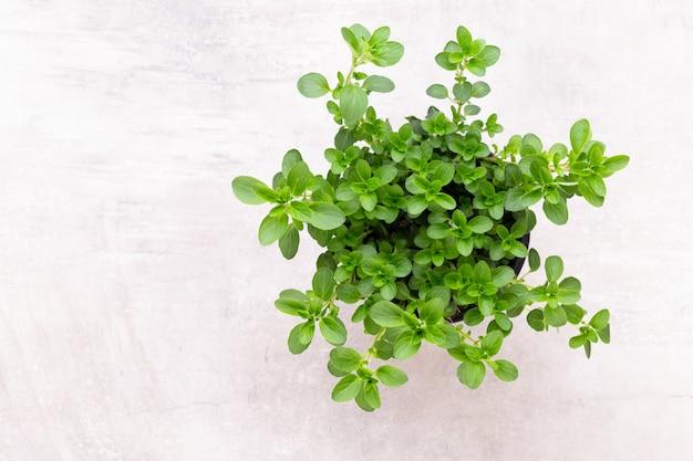 白、トップビューで分離された新鮮な緑のスパイス。