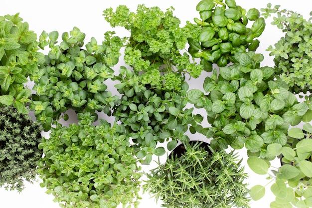 Свежие зеленые специи на белом столе