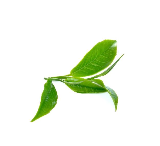 白い壁に新鮮な茶葉