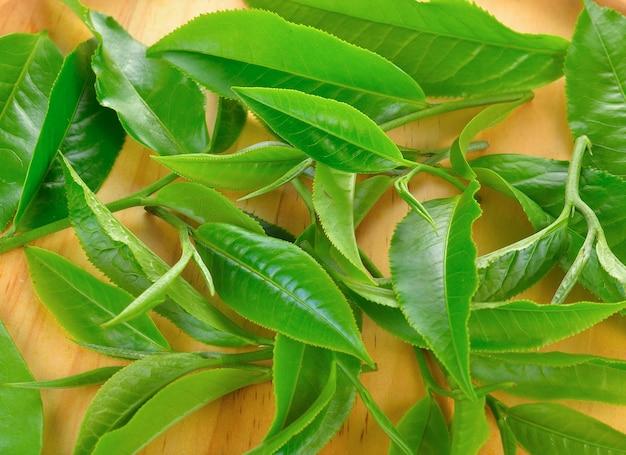 木の新鮮な緑茶葉