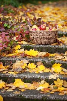 りんごの新鮮な収穫。秋のガーデニング。かごの中の有機赤りんご