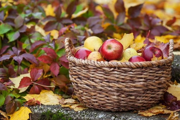 Свежий урожай яблок. осеннее озеленение. день благодарения. органические красные яблоки в корзине