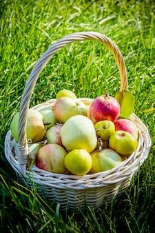 りんごの新鮮な収穫。果物と緑の芝生の上のバスケットの自然のテーマ
