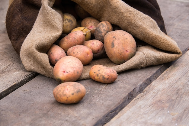 Fresh harvested potatoes with soil still on skin, spilling out of a burlap bag, on a rough wooden palette.