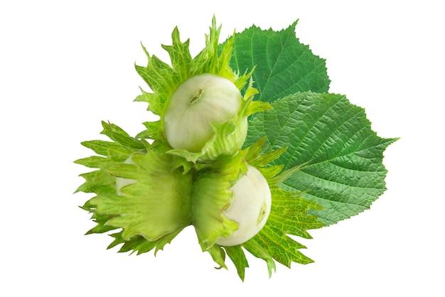 흰색 배경에 고립 된 녹색 잎을 가진 신선한 헤이즐넛