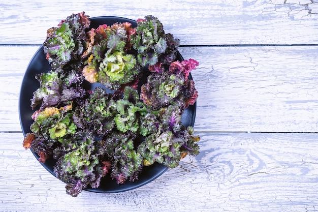 신선한, 건강, colourfull kalettes 꽃 나무 배경에 새싹.