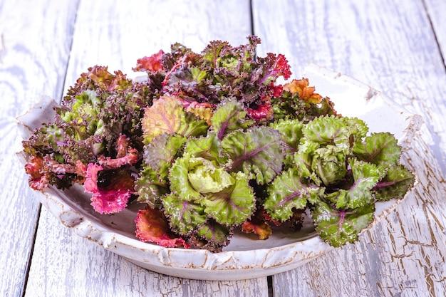 Свежий, здоровый, разноцветный росток цветка kalettes на деревянном фоне.